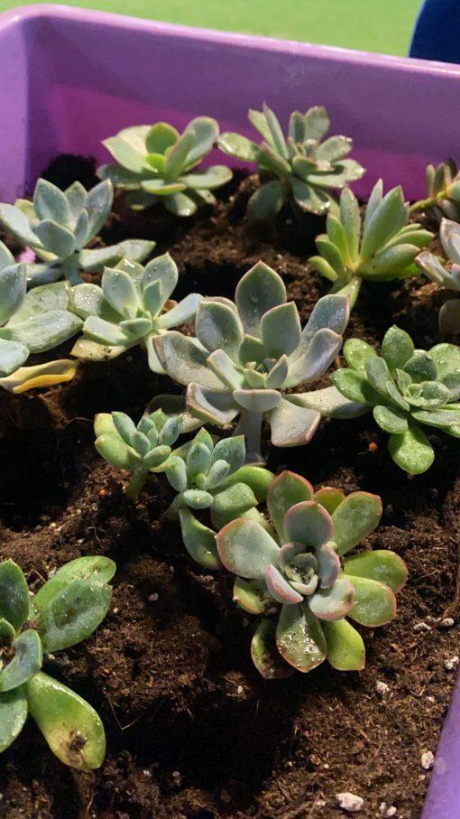 succulent planting 2
