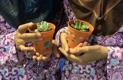 succulent planting 3